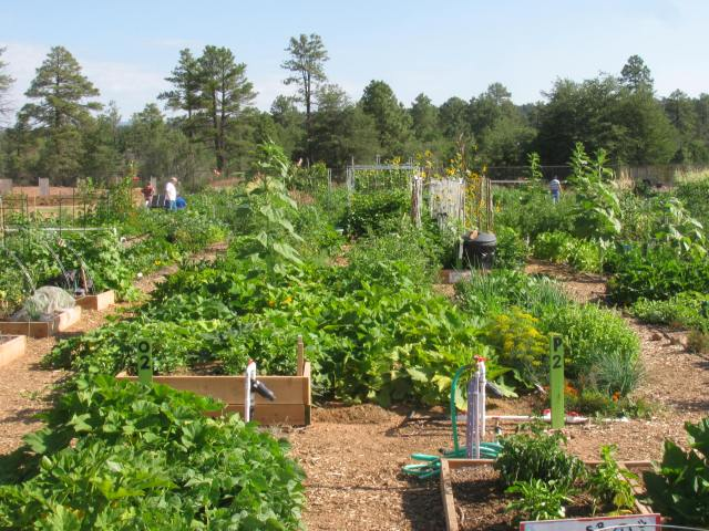 Community Garden Supplies Food for the Local Food Banks