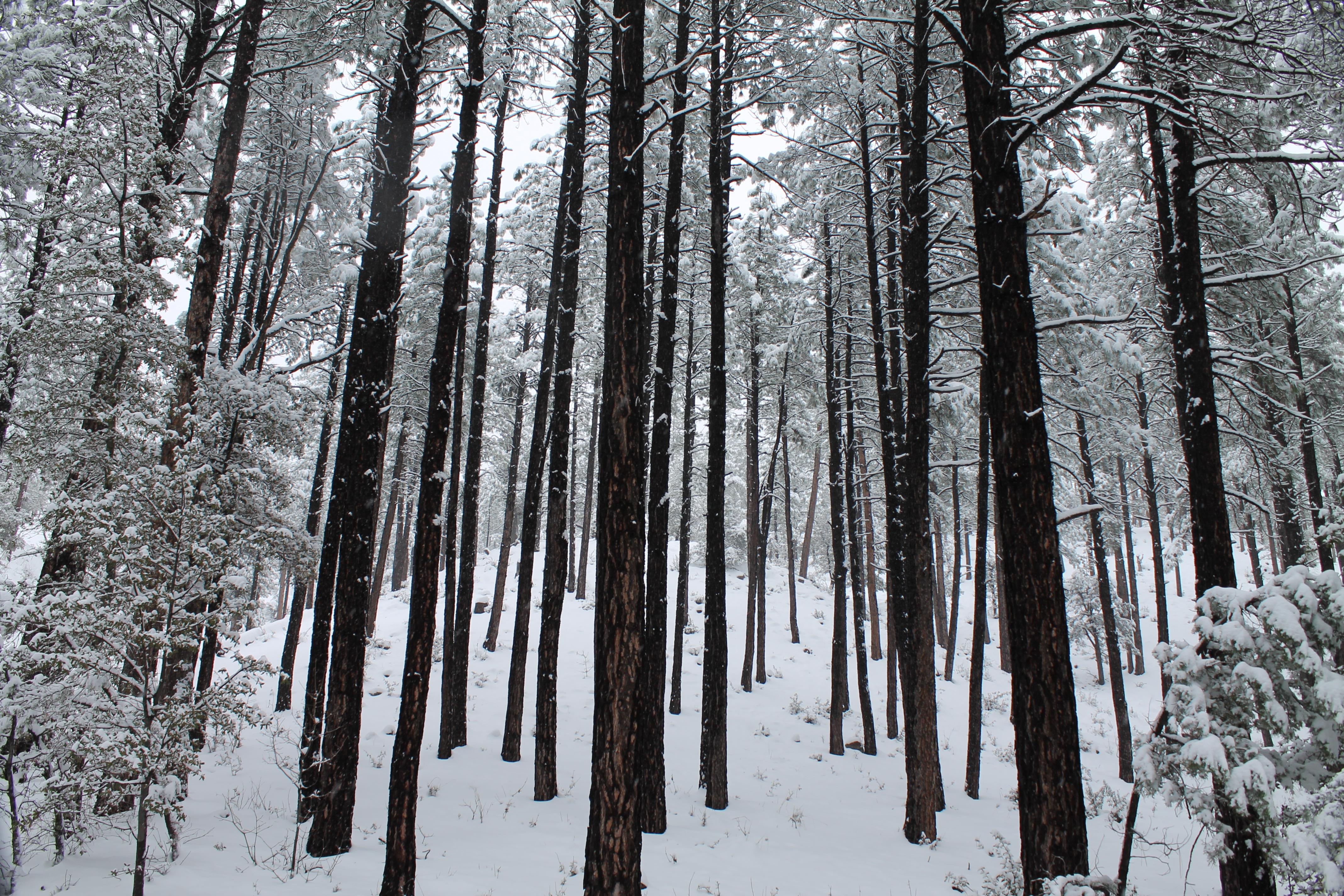 Arizona Winter Snowstorm Transition Town Payson