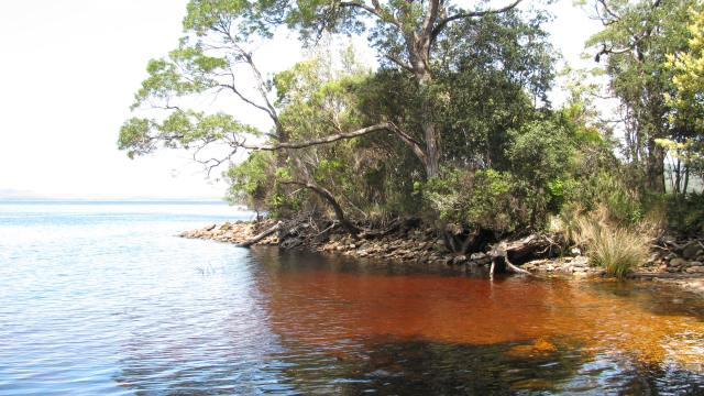 Rich Organic Matter from the Surrounding Rainforest turns the water a rich brown color!