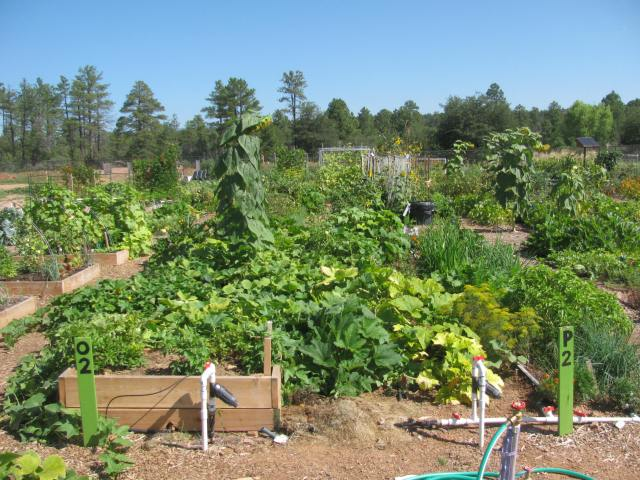 Plant a Garden!
