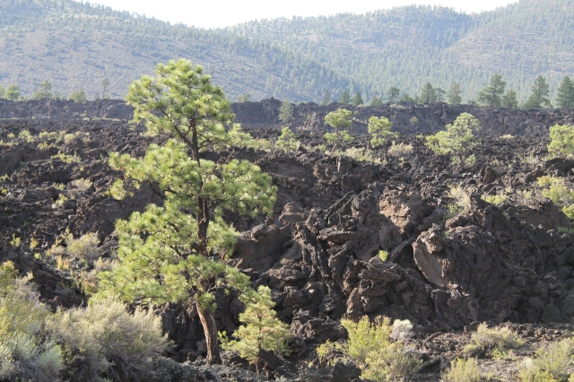 Sunset Crater-Page IV 191