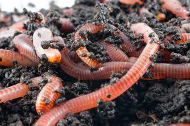 I Like Worms