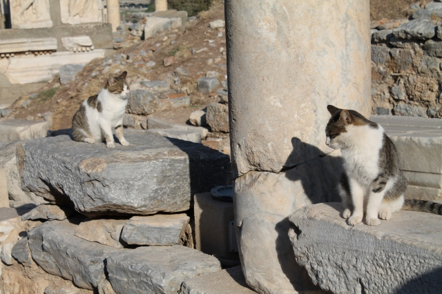 Cats abound in Ephesus