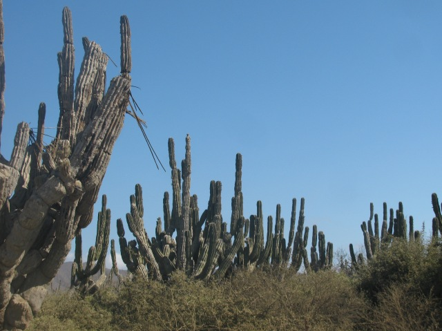 Temperate Desert on the Baja Del Sur
