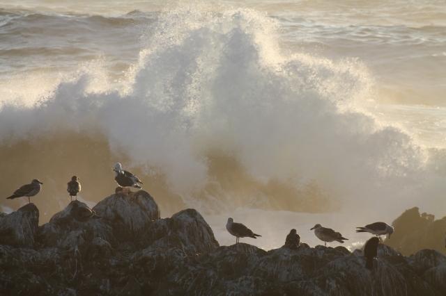 Monterey 052